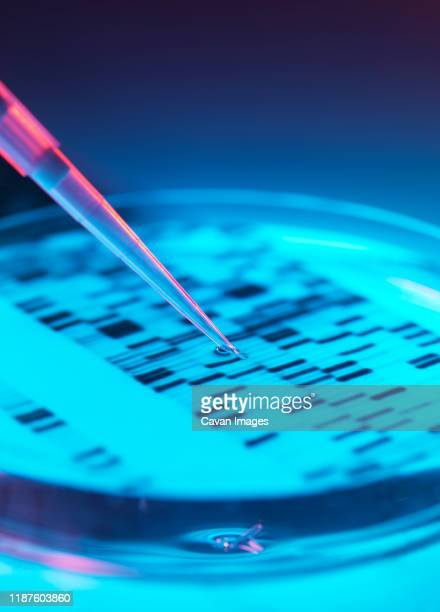 dna research, pipetting into a petri dish with a dna autoradiogram - dna stock pictures, royalty-free photos & images
