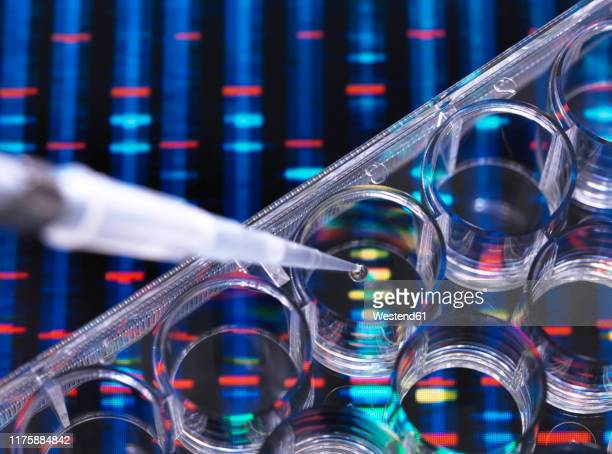 dna research, samples of dna in a multi well plate ready for analysis with dna results in the background - dna stock pictures, royalty-free photos & images