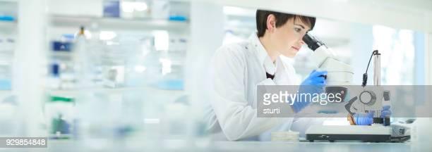 onderzoeker in het lab