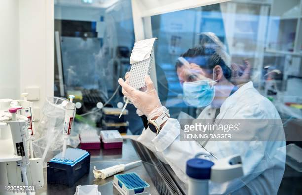 Researcher at Aalborg University looks at samples from behind a safety screen during the screening and analysis of all positive Danish coronavirus...