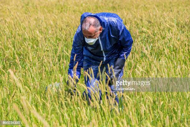 Researcher Checking Grass for Environmental Damage