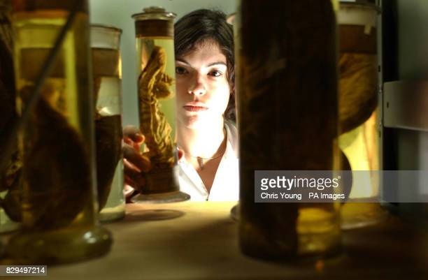 A researcher gathers a jar containing a shark specimen