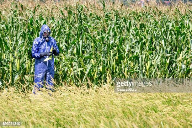Researcher in Protective Suit Examining Corn Crop