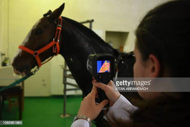 A researcher of the Genetics Veterinary Institute makes a test to a polo horse at La Plata University in La Plata Argentina on November 06 2108...