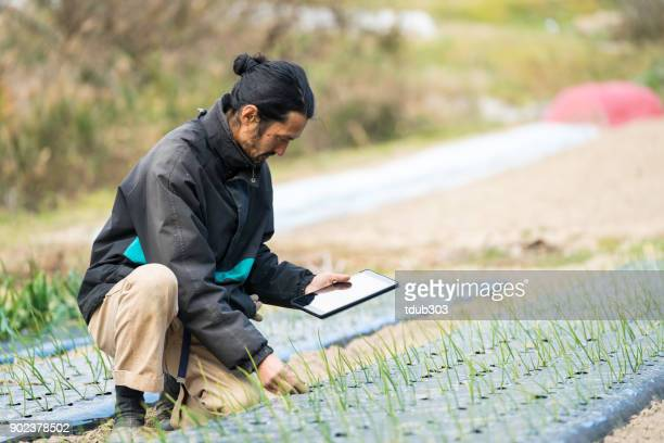 Researcher or farmer monitoring new crops and plant growth with tablet computer