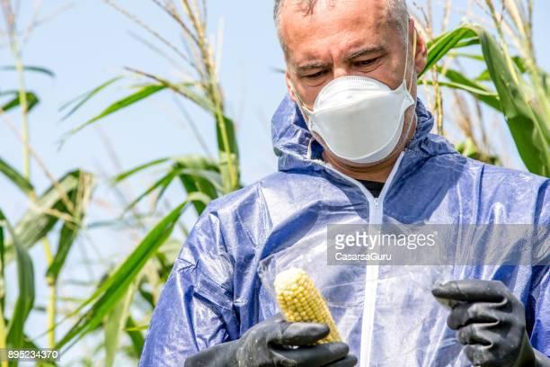 Researcher Taking a Sample of Corn Crop