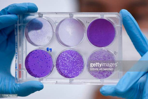 A researcher works on virus replication in order to develop a vaccine against the coronavirus COVID19 in Belo Horizonte state of Minas Gerais Brazil...