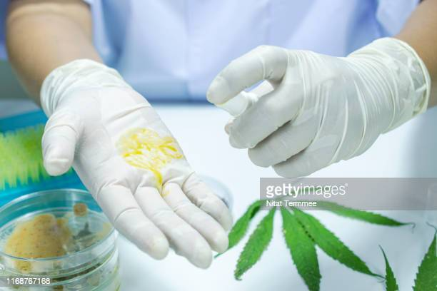 researchers are testing the viscosity of oil extracted from cannabis leaves. - marijuana leaf stock pictures, royalty-free photos & images