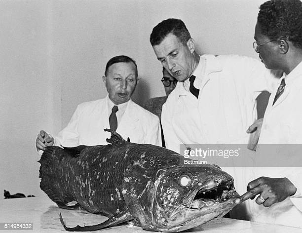 Researchers Looking Over Coelacanth