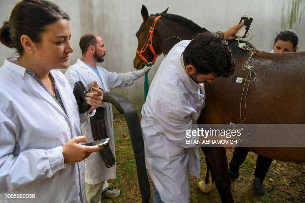 TOPSHOT Researchers of the Genetics Veterinary Institute make tests to a polo horse at La Plata University in La Plata Argentina on November 06 2108...