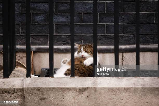 Resident cat Larry rests outside 10 Downing Street in London, England, on September 16, 2020.