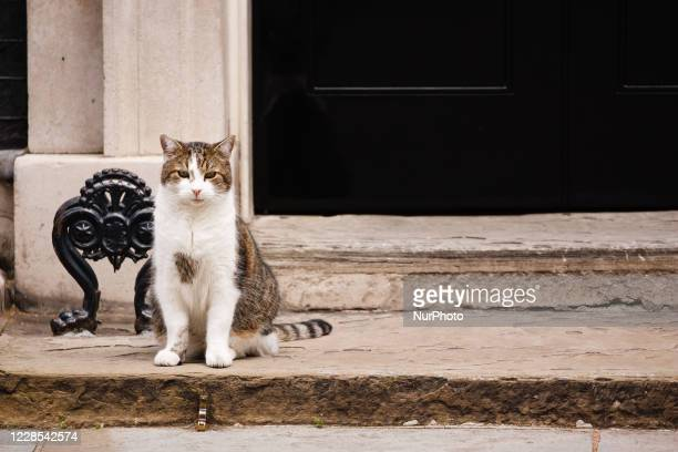 Resident cat Larry sits outside 10 Downing Street in London, England, on September 16, 2020.