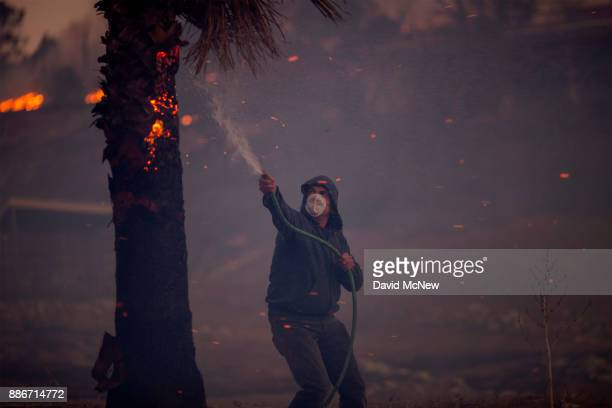 A resident hoses a burning palm tree during the Creek Fire on December 5 2017 in Sunland California Strong Santa Ana winds are rapidly pushing...