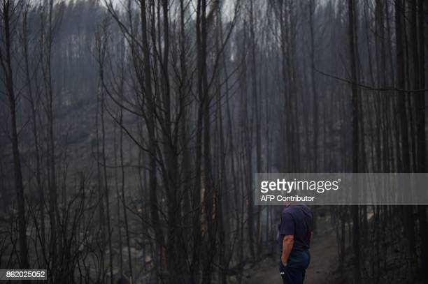 A resident looks at a charred forest after a wildfire in As Neves northwestern Spain on October 16 2017 Wildfires whipped by strong wind gusts...