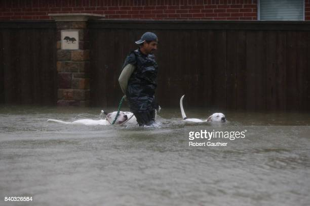 A resident of Twin Oaks Valley leads his dogs out of the flood zone