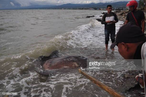 Resident tries to push a sunfish using long wood back into the sea after being stranded alive in Talise Beach, Besusu Village, Palu City, Central...