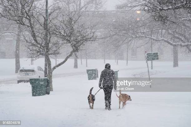 A resident walks her dogs through Humboldt Park after more than 7 inches of snow fell on February 9 2018 in Chicago Illinois The city is bracing for...