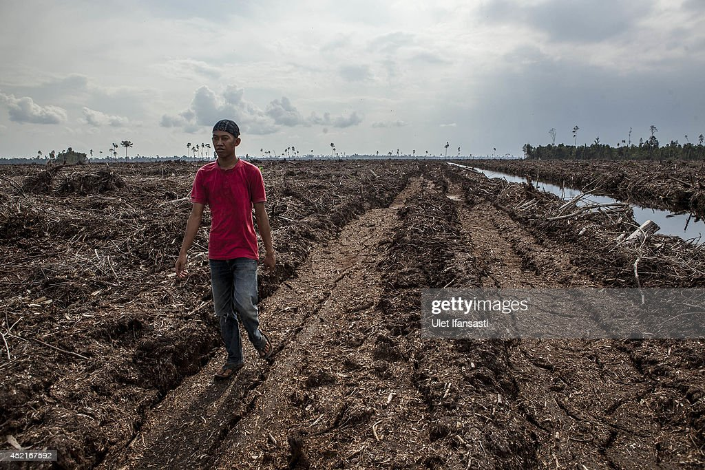 Indonesia's Deforestation Rate Becomes Highest In The World : News Photo