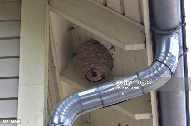 residential house with a common wasp hive (vespula vulgaris) - nido di vespe foto e immagini stock