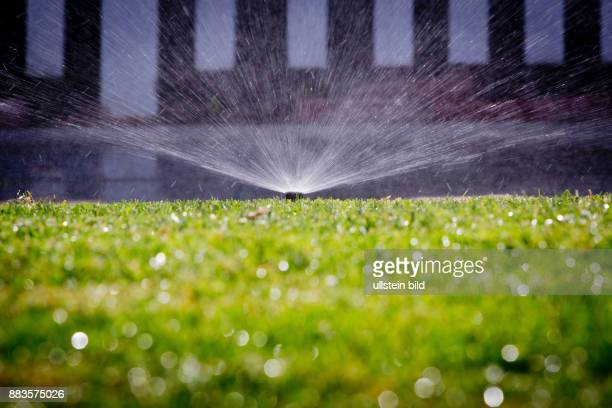 Residential sprinkler system irrigating lawn in Pacific Beach San Diego