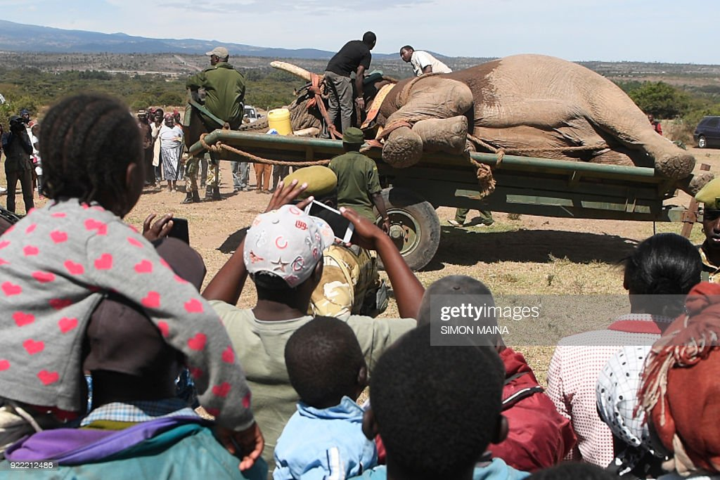 KENYA-ENVIRONMENT-ANIMAL-ELEPHANT : News Photo