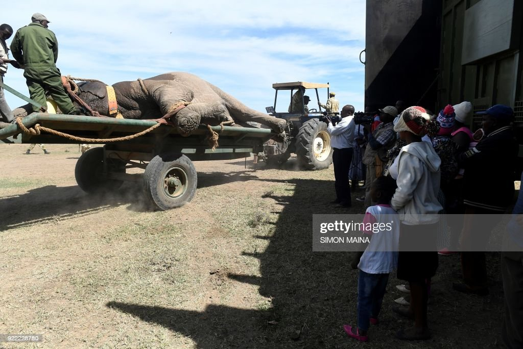 Residents gather as workers supervise a tranquilised male elephant on the rear of a truck at Lamuria on Nyeri county on February 21, 2018, during the translocation of elephants from Solio, Sangare and Lewa to the northern part of Tsavo East National Park in Ithumba. /