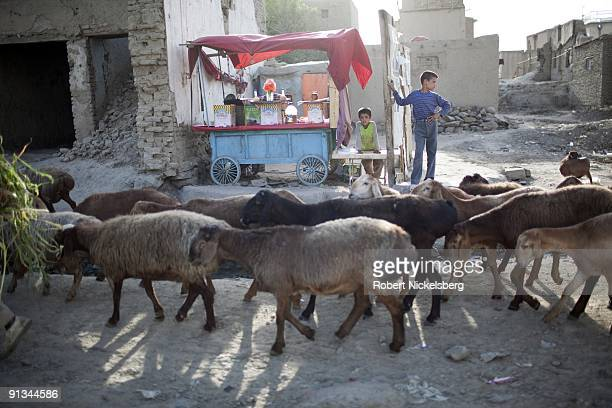 Residents in the Jangalak neighborhood of Kabul Afghanistan watch a flock of sheep moving through the street during the month of Ramadan August 29...