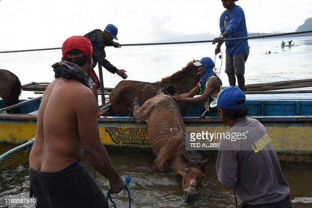 Residents living at the foot of Taal volcano unload their horses from a wooden boat after rescuing them from their homes and transporting them to...
