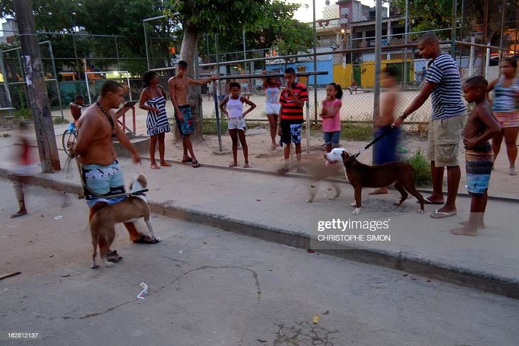 Residents of Rio de Janeiro's Cidade de Deus shantytown gather with their pit bull dogs, on February 23, 2013