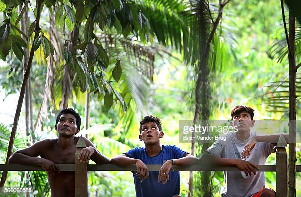 Residents of the Brazilian Amazon community of Boa Frente watch as Brazil nut harvesters climb the large rainforest trees to gather seeds for a...