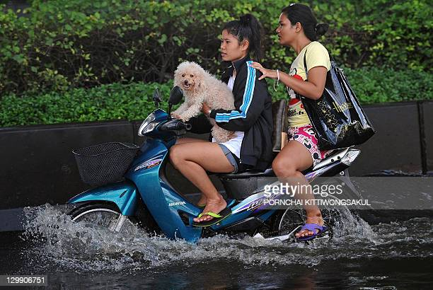 Residents transport their dog on a motorbike down a flooded street in the Thai capital Bangkok on October 22 2011 Thailand's prime minister warned on...