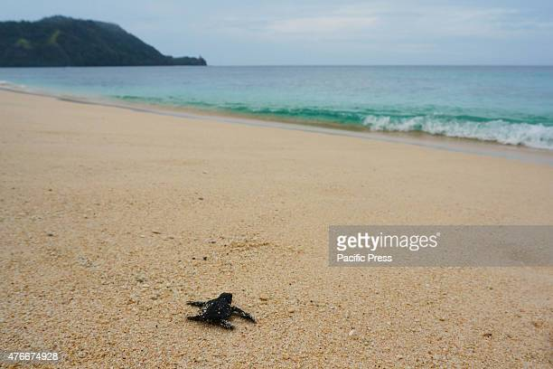 Residents who live in coastal areas Paal release baby turtles into the sea They did this to save turtles from human disturbance Paal beach is visited...
