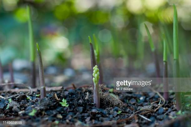 resilience - resilience stock photos and pictures