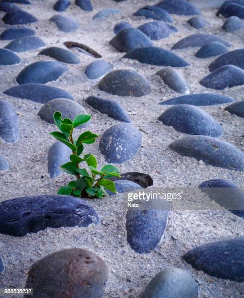resilience - nature stock pictures, royalty-free photos & images