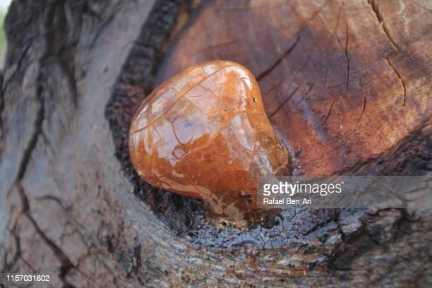 resin dripping from a tree - rafael ben ari stock-fotos und bilder