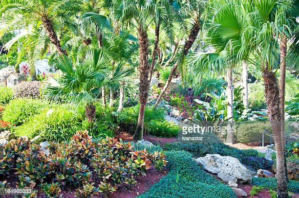 resort hotel tropical forest - florida landscaping stock pictures, royalty-free photos & images