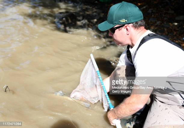 Resources Analyst Joshua Porter with the East Bay Regional Park District releases a captured steelhead trout back into the Alameda Creek in Nilies...