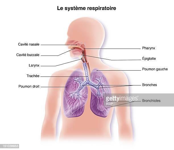 Respiratory Tract Drawing