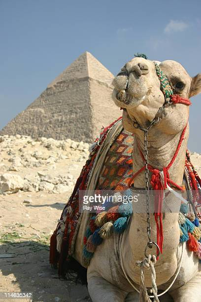 rest like an egyptian - cairo stock pictures, royalty-free photos & images