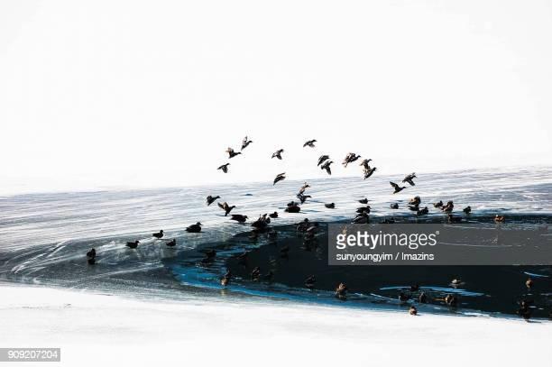 Rest of Migratory Birds