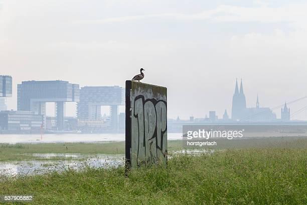 Ruhen auf den Rhein