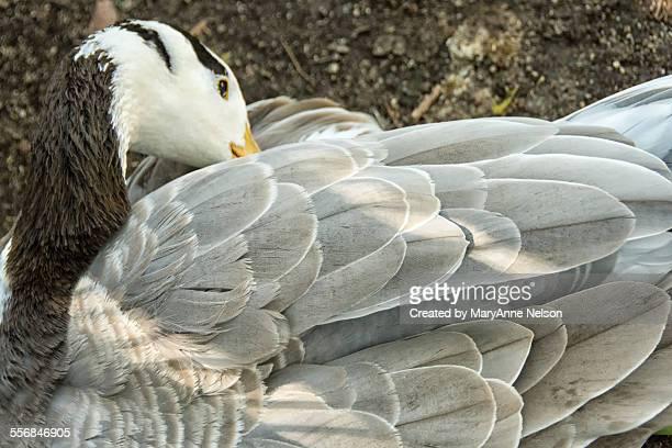 resting bird - escondido california stock photos and pictures