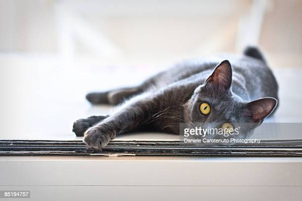 resting cat - daniele carotenuto stock pictures, royalty-free photos & images