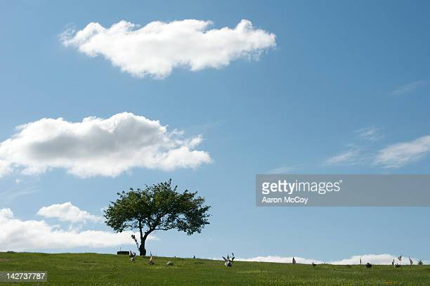 resting ground - rest in peace stock pictures, royalty-free photos & images