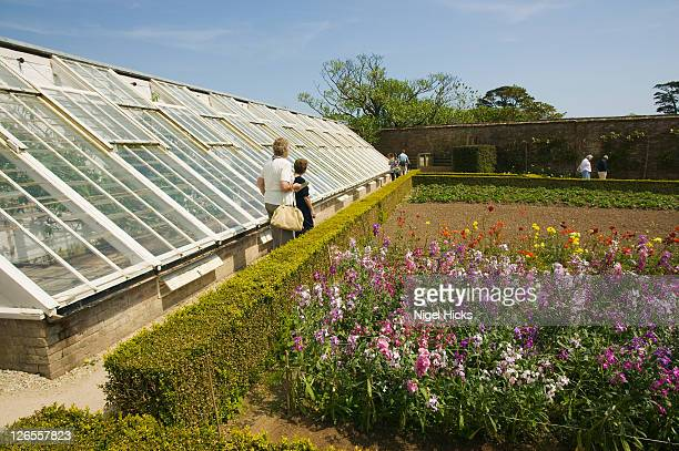 A restored greenhouse in the Lost Garden of Heligan, nr St Austell, Cornwall, Great Britain.