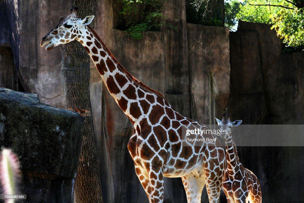 Milwaukee County Zoo Animals : News Photo