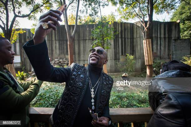 Retired American boxer Floyd Mayweather Jr takes selfie with his newly adopted giant panda 'TMT Floyd Mayweather' at the Chengdu Research Base of...