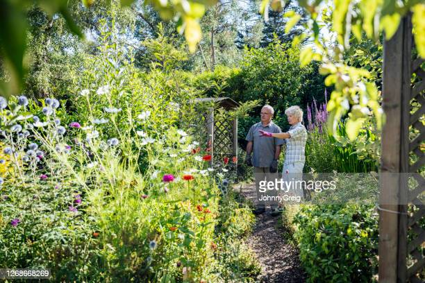 retired couple discussing plans for their summer garden - planning stock pictures, royalty-free photos & images