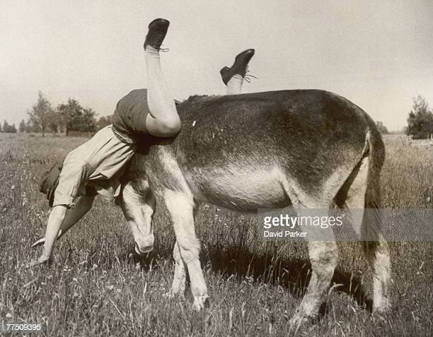 A retired donkey from Margate Sands refuses to give a ride to a passing ATS woman on the Canterbury marshes 30th June 1941