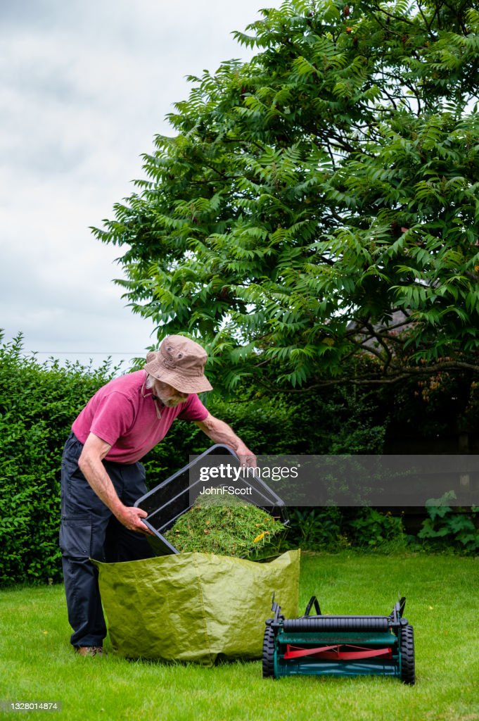 Retired man emptying cut grass from a mower box : Stock Photo
